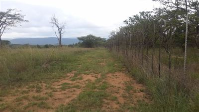 Property Louis Trichardt : Houses For Sale Louis Trichardt (All), Louis Trichardt, Farms  property for sale Price:3,500,000