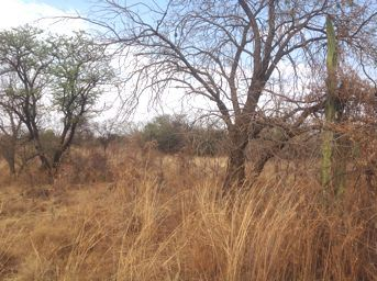 Kameelfontein property for sale. Ref No: 13325560. Picture no 1