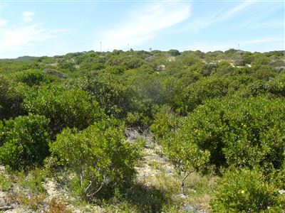 Stilbaai Wes property for sale. Ref No: 13395265. Picture no 2