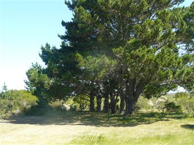 Stilbaai property for sale. Ref No: 13400546. Picture no 2