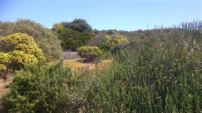 Yzerfontein property for sale. Ref No: 13401096. Picture no 1