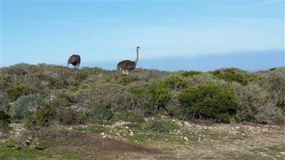 Yzerfontein property for sale. Ref No: 13500255. Picture no 4