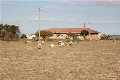 Farms for sale in Vredenburg