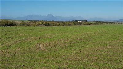 Paarl property for sale. Ref No: 13515149. Picture no 6