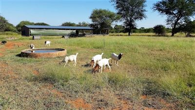 Lephalale property for sale. Ref No: 13533441. Picture no 4