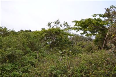 Ballito, Ballito Property  | Houses For Sale Ballito, Ballito, Vacant Land  property for sale Price:20,000,000