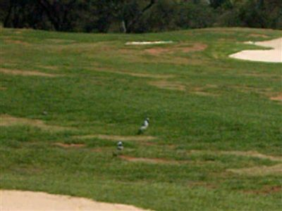 Parys Golf And Country Estate property for sale. Ref No: 13396492. Picture no 3
