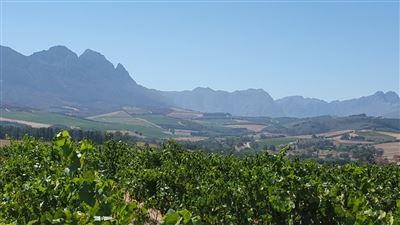 Property and Houses for sale in Stellenbosch Farms, Farms - ZAR 26,500,000