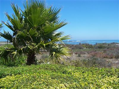 Jacobsbaai property for sale. Ref No: 13471300. Picture no 33