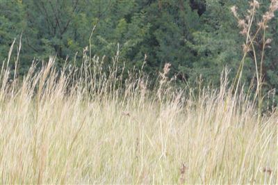 Parys Golf And Country Estate property for sale. Ref No: 13457968. Picture no 3