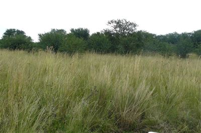 Parys Golf And Country Estate property for sale. Ref No: 13457968. Picture no 4