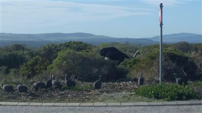 Yzerfontein property for sale. Ref No: 13576714. Picture no 9