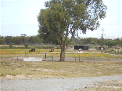 Yzerfontein property for sale. Ref No: 13547436. Picture no 5