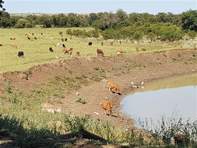Farms for sale in Elandshoek