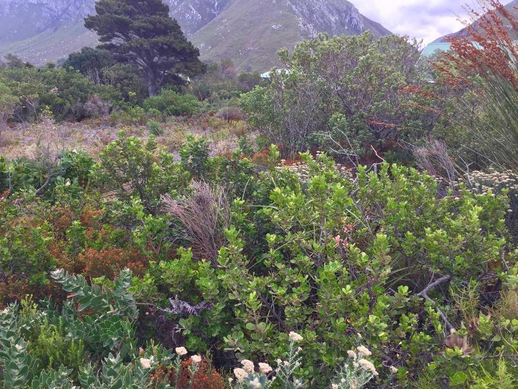 Vacant land/Plot | Bettys Bay | Western Cape