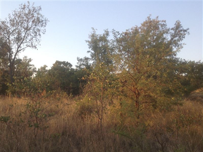 Krokodilspruit property for sale. Ref No: 13355098. Picture no 10