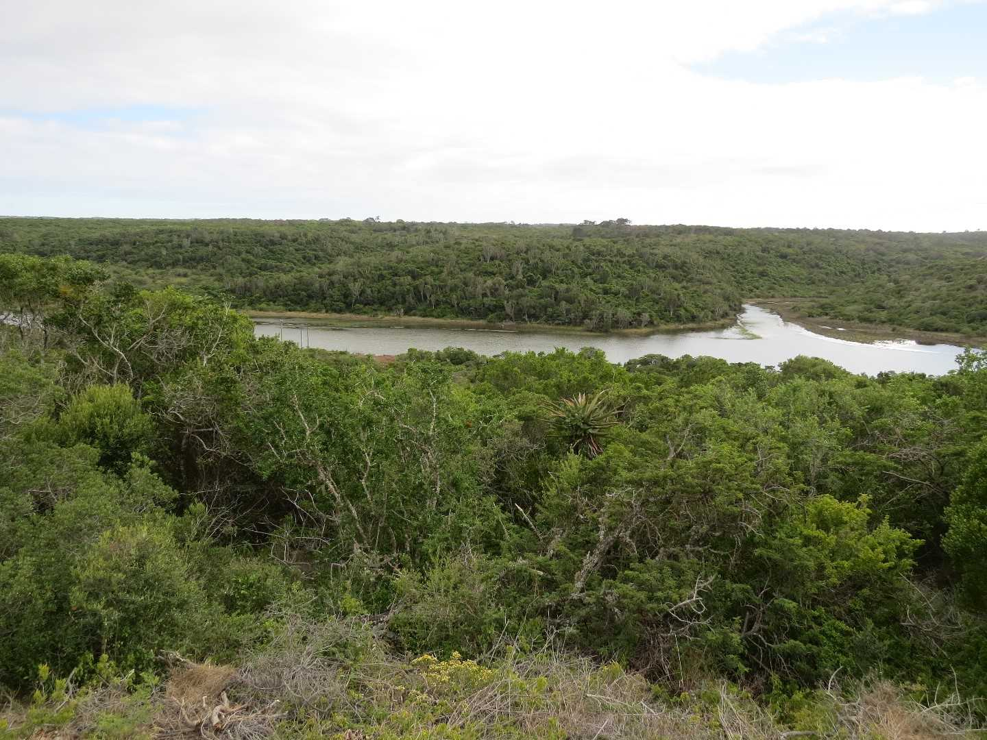 Indigenous bush and river views