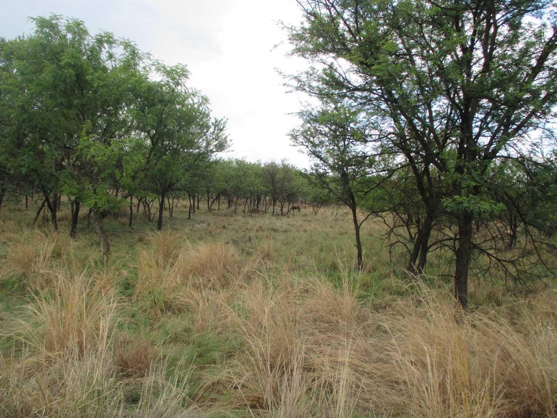 Leeuwfontein Estates