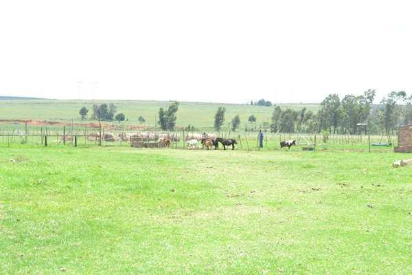 Livestock on farm
